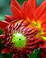 "San Francisco - Golden Gate Park Conservatory Of Flowers ""Sharp"" (8287987048).jpg"