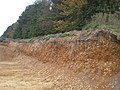 Sand and gravel strata on the southern edge of Coxford Wood - geograph.org.uk - 610732.jpg