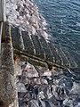 Sea wall, Livermead - geograph.org.uk - 1723173.jpg