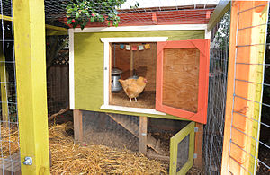 A backyard chicken coop with enclosed run in S...