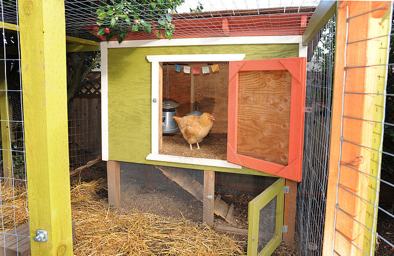 Chickens life less messy for Cute chicken coop ideas