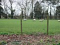 Sheep grazing at Little Sandown Farm - geograph.org.uk - 351655.jpg