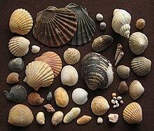 Shell Island 1985.jpg