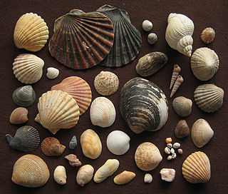 2010 Bivalvia taxonomy Classification of bivalve molluscs according to some authorities