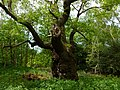 Sherwood Forest-8863468963.jpg
