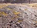 Skålgropshällen med ca 520 skålgropar i Pryssgården, Östra Eneby sn, Norrköping, den 4 mars 2008, bild 30.JPG