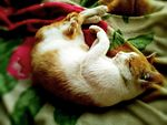 File:Sleeping cat 04.jpg