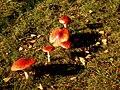 Slovakia autumn 9.JPG