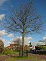 Soest, Herdenkingsboom Gr Gaesbeker Gilde, L Brinkw-Gr Melmw GM0342wikinr51.jpg