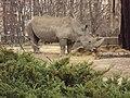 Sofia Zoo - Rhino 004.jpg