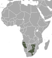 Southern African Hedgehog area.png