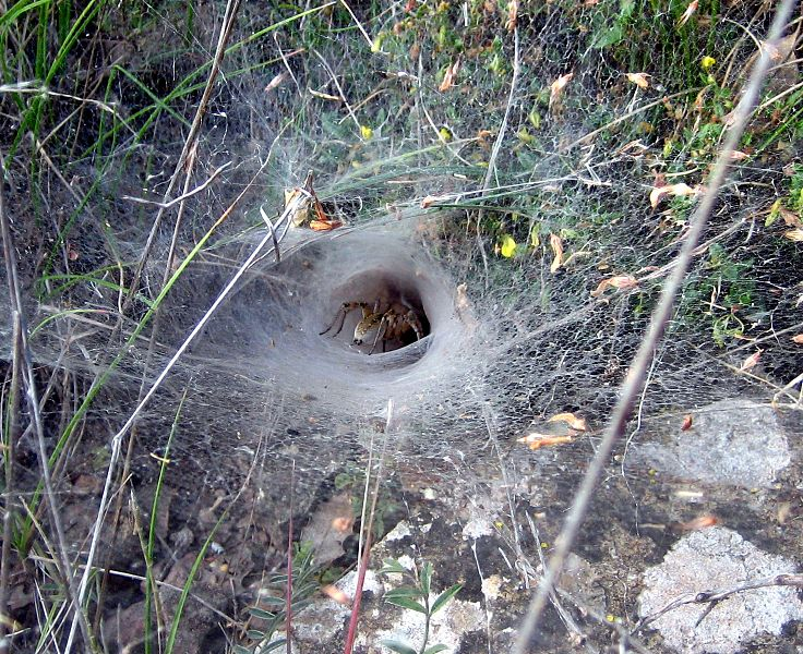 File:Spider web Teruel.jpg