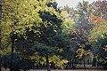 Spomenik prirode Park Blandaš u Kikindi 03.JPG