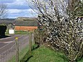 Spring Blossom at the Country Market - geograph.org.uk - 352739.jpg
