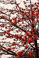 Spring in Delhi 2 (2320535136).jpg