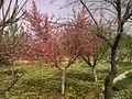 Spring in Jbaa - March 2010 - panoramio.jpg