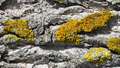 Spring lichens 04.png