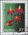 Stamp of Albania - 1974 - Colnect 354129 - Bittersweet Solanum dulcamara.jpeg