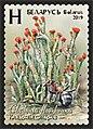 Stamp of Belarus - 2019 - Colnect 873306 - Devil s Matchsticks Cladonia floerkeana.jpeg