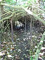 Starr-091104-9178-Hibiscus tiliaceus-tunnel-Kahanu Gardens NTBG Kaeleku Hana-Maui (24361897883).jpg