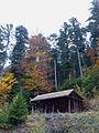 Steige-Forêt d'automne (1).jpg