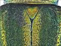 Stenochroma daliensis Bentanachs, 2010 Scutellum (11081435685).png