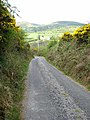 Sunken lane on the northern slopes of the Curlew Mountains - geograph.org.uk - 798269.jpg