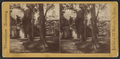 Sunny Side; Irving's Residence on the Hudson, N.Y, from Robert N. Dennis collection of stereoscopic views 2.png