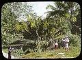 Surveyers in the jungle (3608379022).jpg