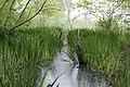 Swamp (29638063793).jpg