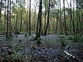 Swamp next to the Teufelsbruch swamp in spring 8.jpg