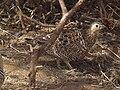 Tanzania 0606 cropped2 Nevit.jpg