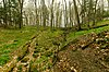Tellock's Hill Woods.jpg