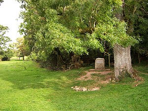 At the edge of a field, there is a hollow in the grass, filled with stones; above it there is a tree and a marker-stone.
