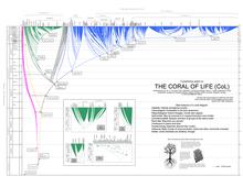 Characteristics Of Life Worksheet Answer Key - Nidecmege