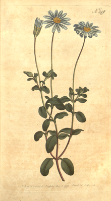 The Botanical Magazine, Plate 249 (Volume 7, 1794).png