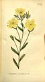The Botanical Magazine, Plate 312 (Volume 9, 1795).png