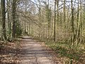The Daffodil Way in Dymock Wood - geograph.org.uk - 768291.jpg