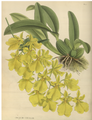 The Orchid Album-01-0008-0001.png