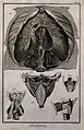 The diaphragm (fig. 1) after Haller, the pharynx, seen from Wellcome V0007838.jpg