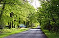 The road through Cowleaze Wood - geograph.org.uk - 1284781.jpg