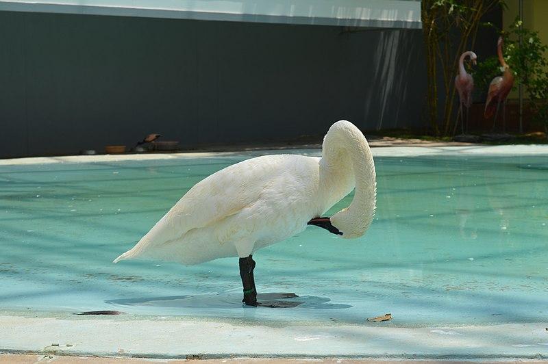 Wings-The Bird Park in Ramoji Film City