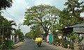 Tl 953- tân châu- angiang, vietnam,15-03-13-dyt - panoramio.jpg