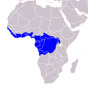 African pied hornbill - Image: Tockus fasciatus Distribution