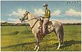 Tom Murrell and Hamel's Golden Magic, owned by Hamel's Ice Cream, Shreveport, La. (8185143435).jpg