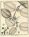 Topobea parasitica Aublet 1775 pl 189.jpg