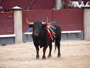 Route of the Bull - A fighting bull in his last minutes of life