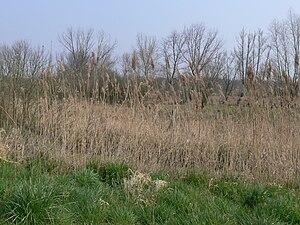 Nord-Pas-de-Calais - Bog of Vred, natural reserve