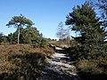 Track, across Ideford Common - geograph.org.uk - 1532991.jpg