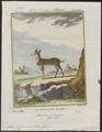 Tragulus javanicus - 1700-1880 - Print - Iconographia Zoologica - Special Collections University of Amsterdam - UBA01 IZ21500200.tif